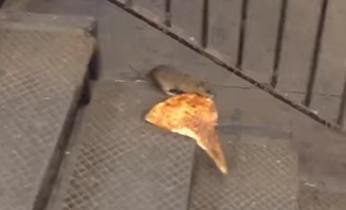Pizza Rat